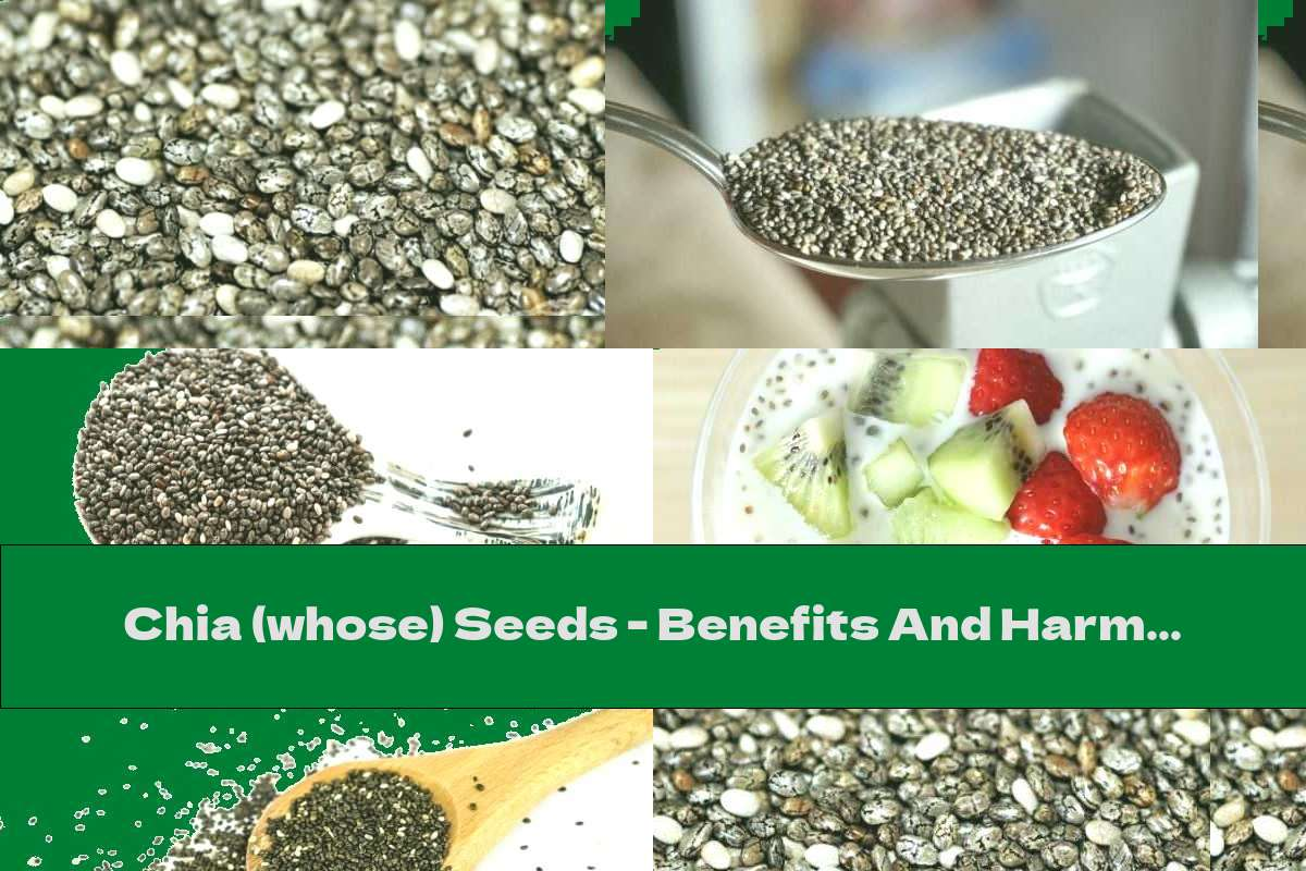 Chia (whose) Seeds - Benefits And Harms