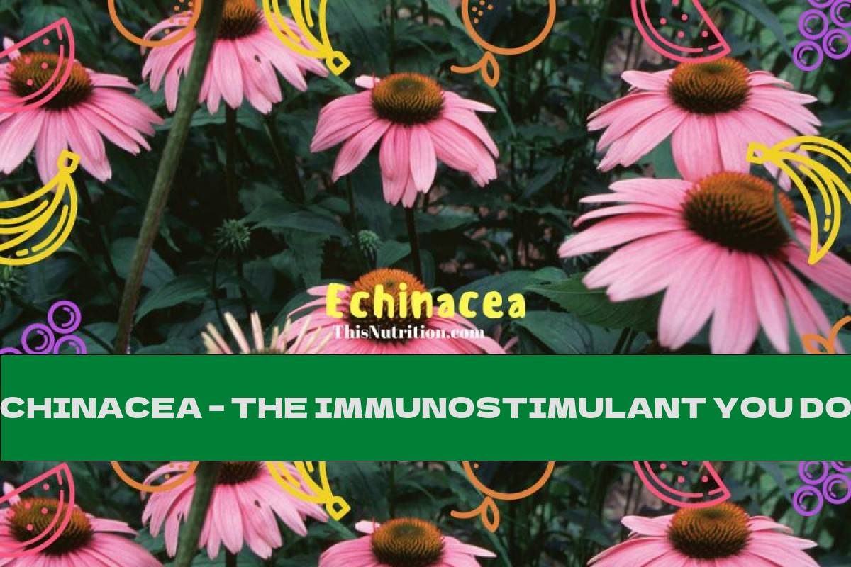ECHINACEA – THE IMMUNOSTIMULANT YOU DON'T KNOW