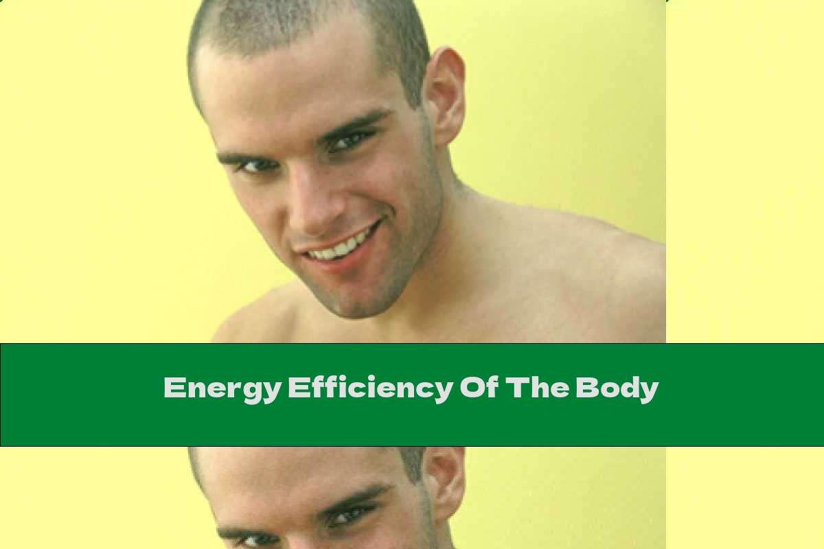 Energy Efficiency Of The Body